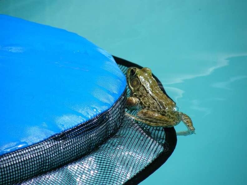 Frog saved by FrogLog