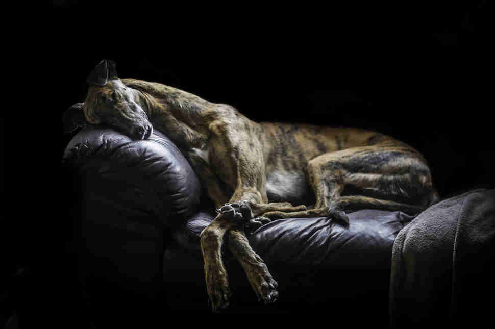 DPOTY Portrait 2nd © David Yanez The Kennel Club (2)