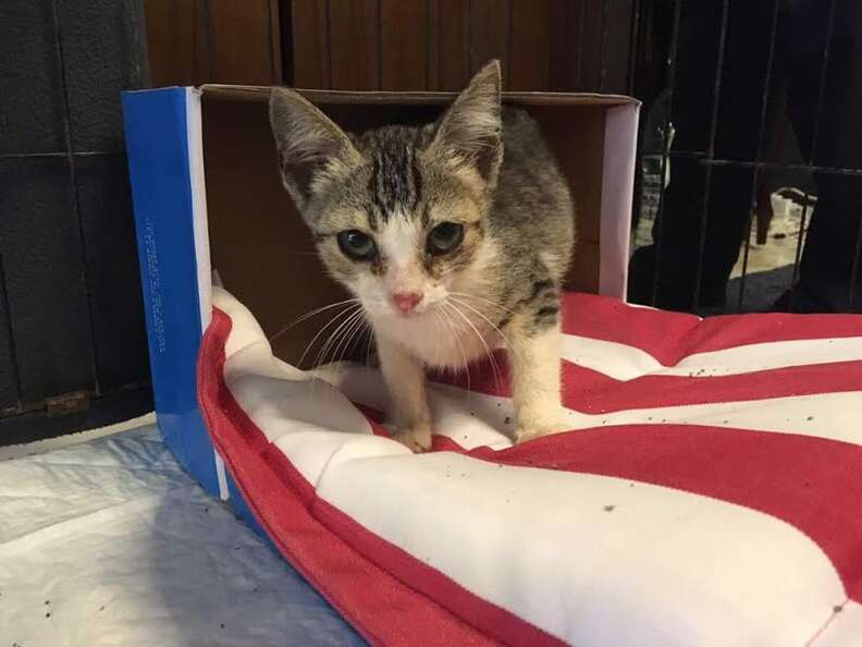 Stray kitten rescued from construction site