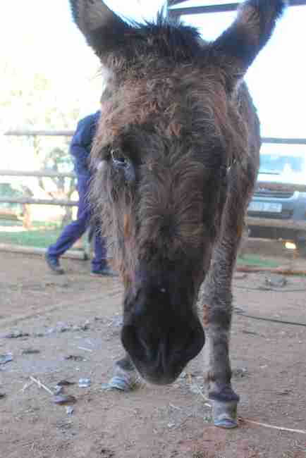 Donkey rescued from neglect