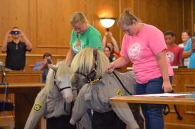 Mini therapy horses become deputies