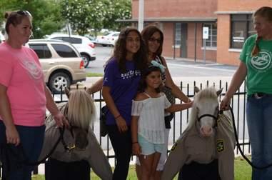 Mini therapy horses sworn in as deputies