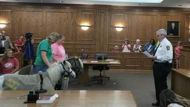 Mini horses sworn in as deputies