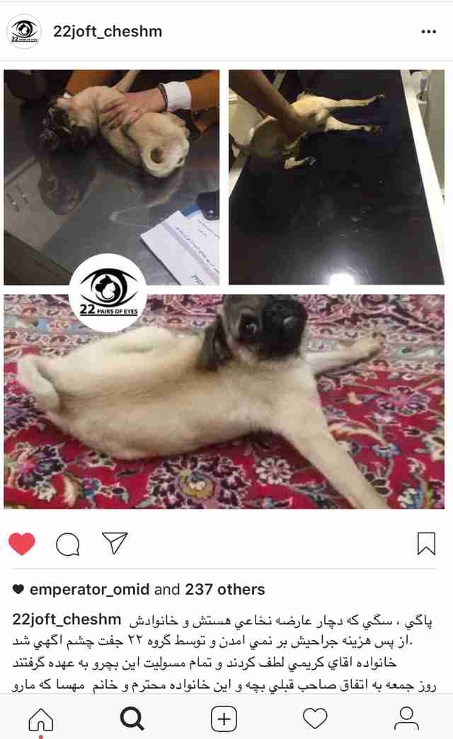 Post about disabled pug in Iran