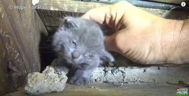 kittens rescued from stairwell