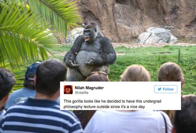 Ted Talk Gorilla