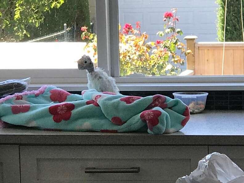 Rescued bird mourns friend