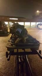 Paralyzed dog on stretcher