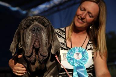 Martha Wold's Ugliest Dog