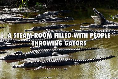 Florida gators in summer