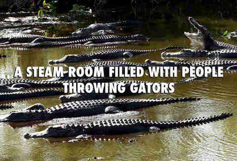 Florida gators in summer