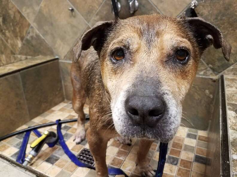 Urgent shelter dog in North Carolina