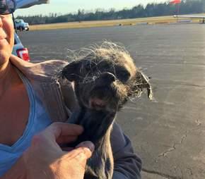 Shelter dog on tarmac