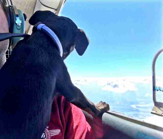 Rescue pup on his rescue flight