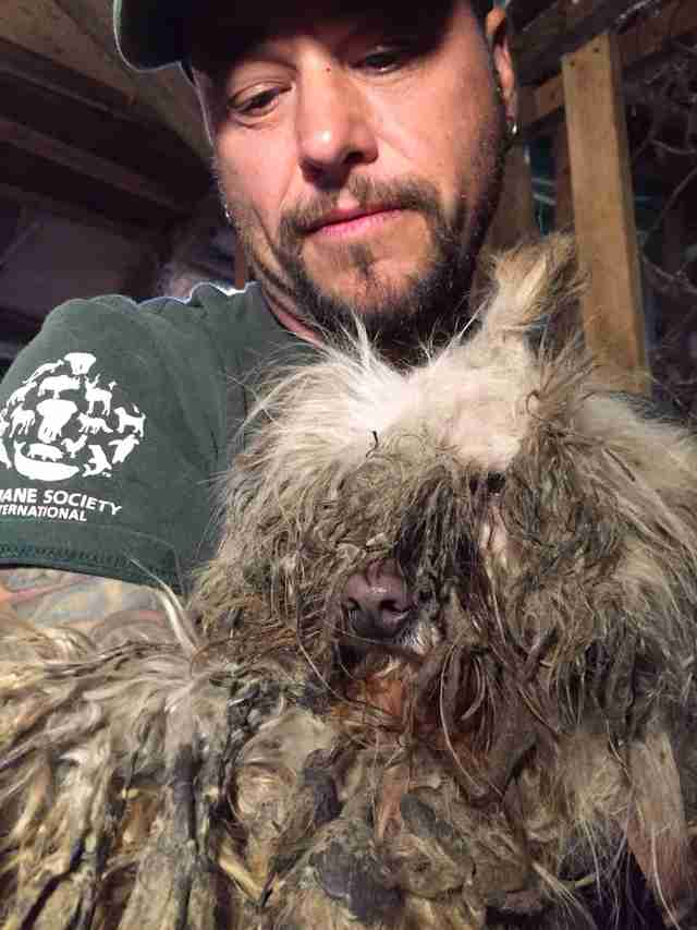 Man holding matted dog rescued from dog meat farm
