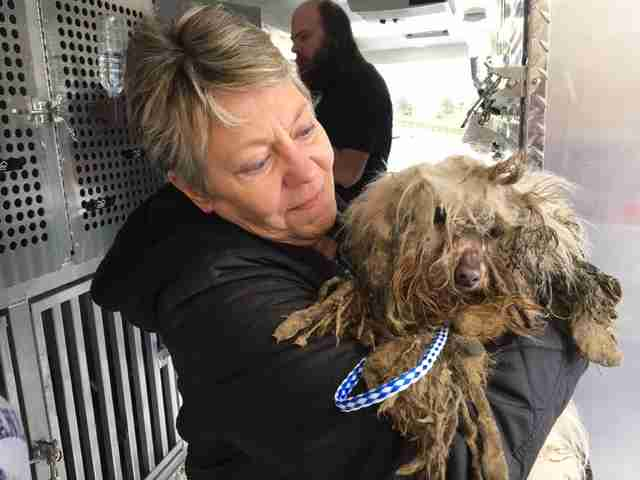 Woman holding matted dog rescued from dog meat farm
