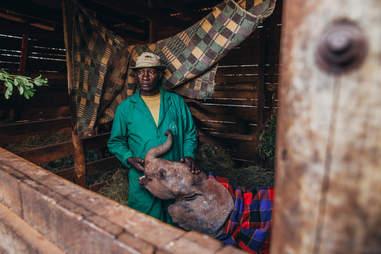 Baby elephant and caretaker in Kenya orphanage