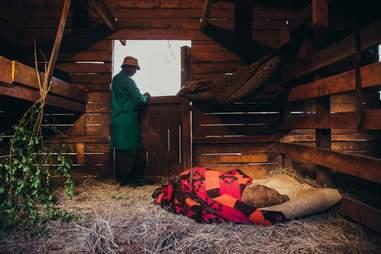 Keeper watching over sleeping baby elephant