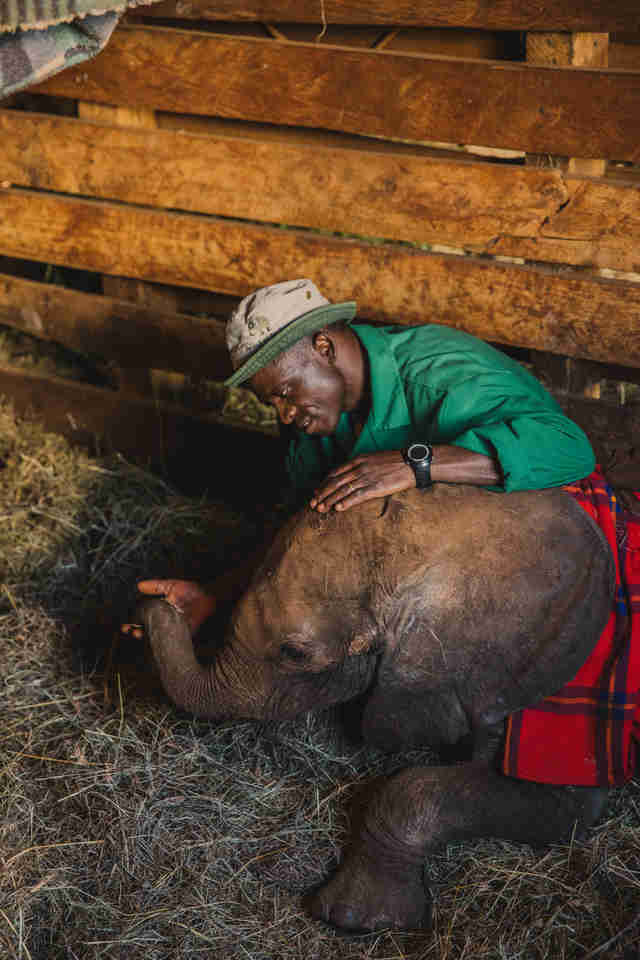 Elephant orphan and keeper