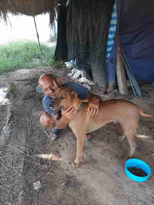 Man helping street dog