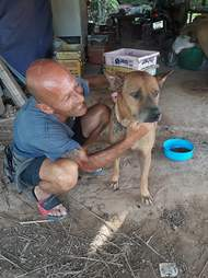 Man helping street dog in Thailand
