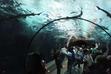 Newport Beach Aquarium