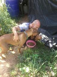 Man feeding street dog in Thailand
