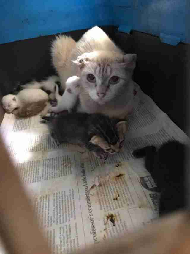 Sick mother cat with babies