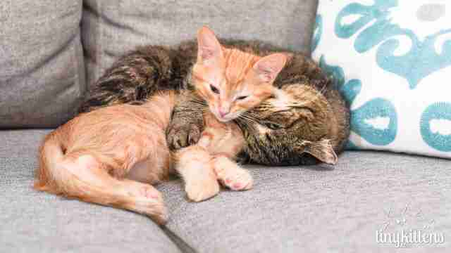 Rescued feral cat with kitten