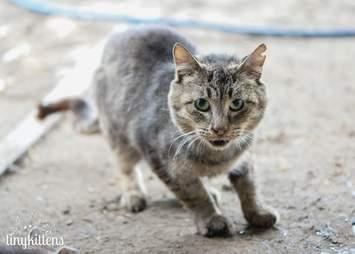Rescued feral cat