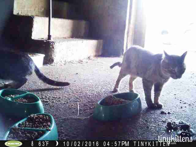 Feral cats in colony