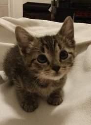 Foster kitten needing home