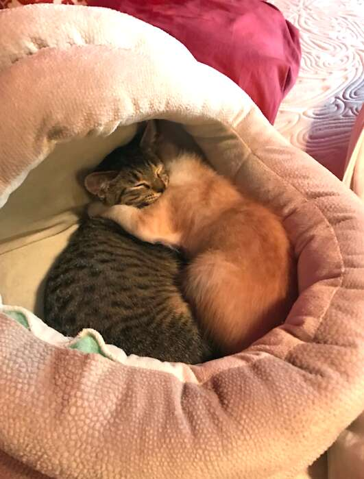 Foster kitten brothers comfort each other