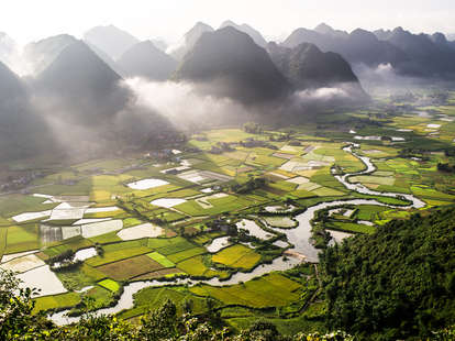 Vietnamese Rice Field