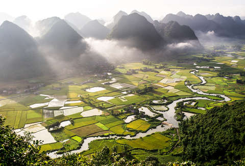 Vietnamese Rice Field