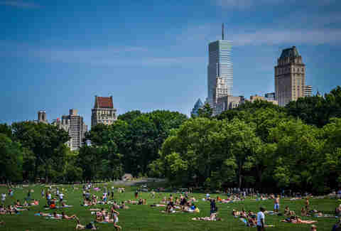 sheep meadow picnic