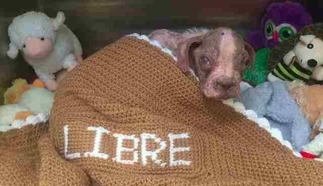 Libre rescued dog