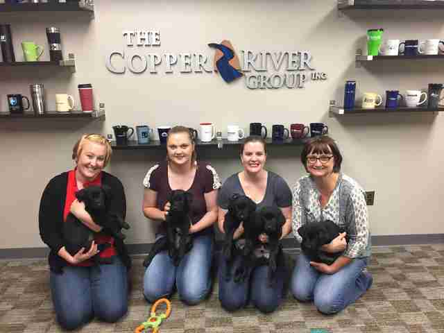 puppies visit businesses