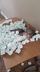 cat loves packing peanuts