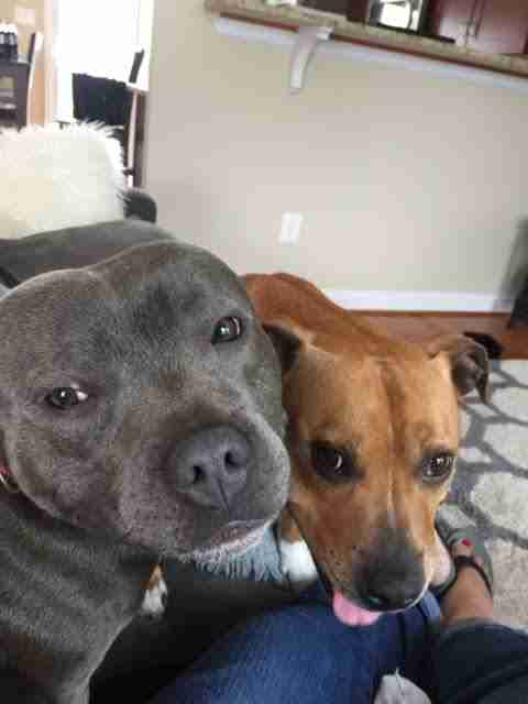 Bonded foster dogs