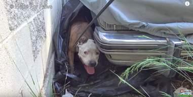 lost dog hides under car