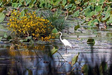 Egret in Wildwood park