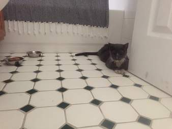 senior cat rescued from nyc building basement