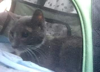 Cat saved from basement in cat carrier