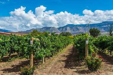 Winery in Palisade, Colorado