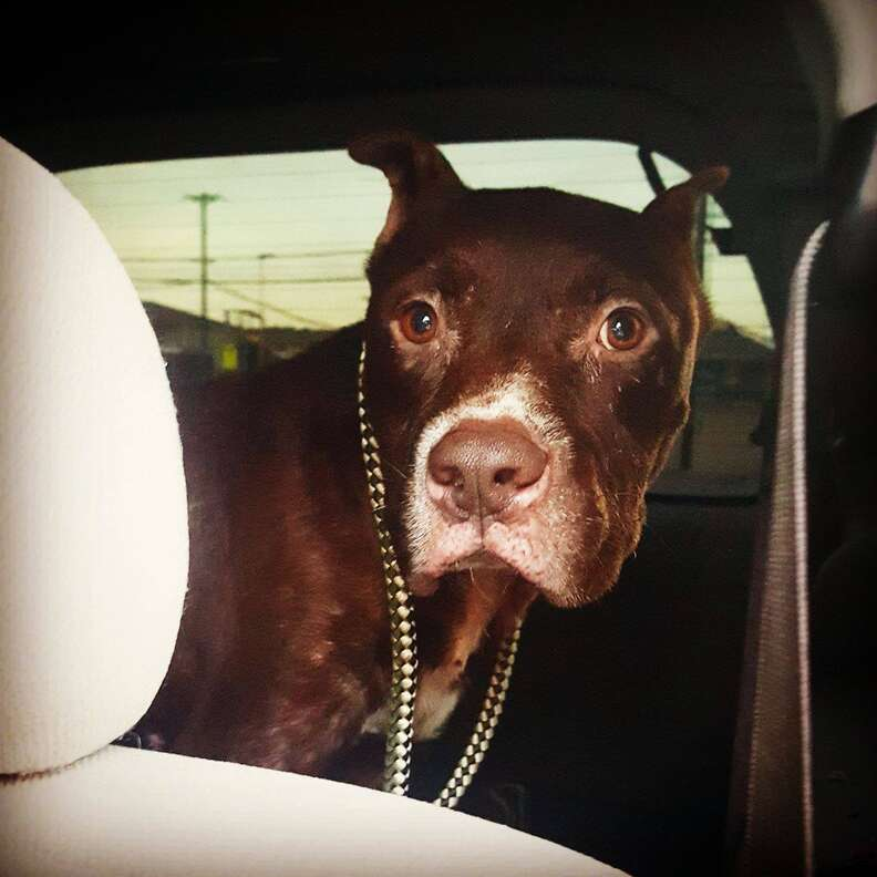 Dog saved from dumping ground in Texas