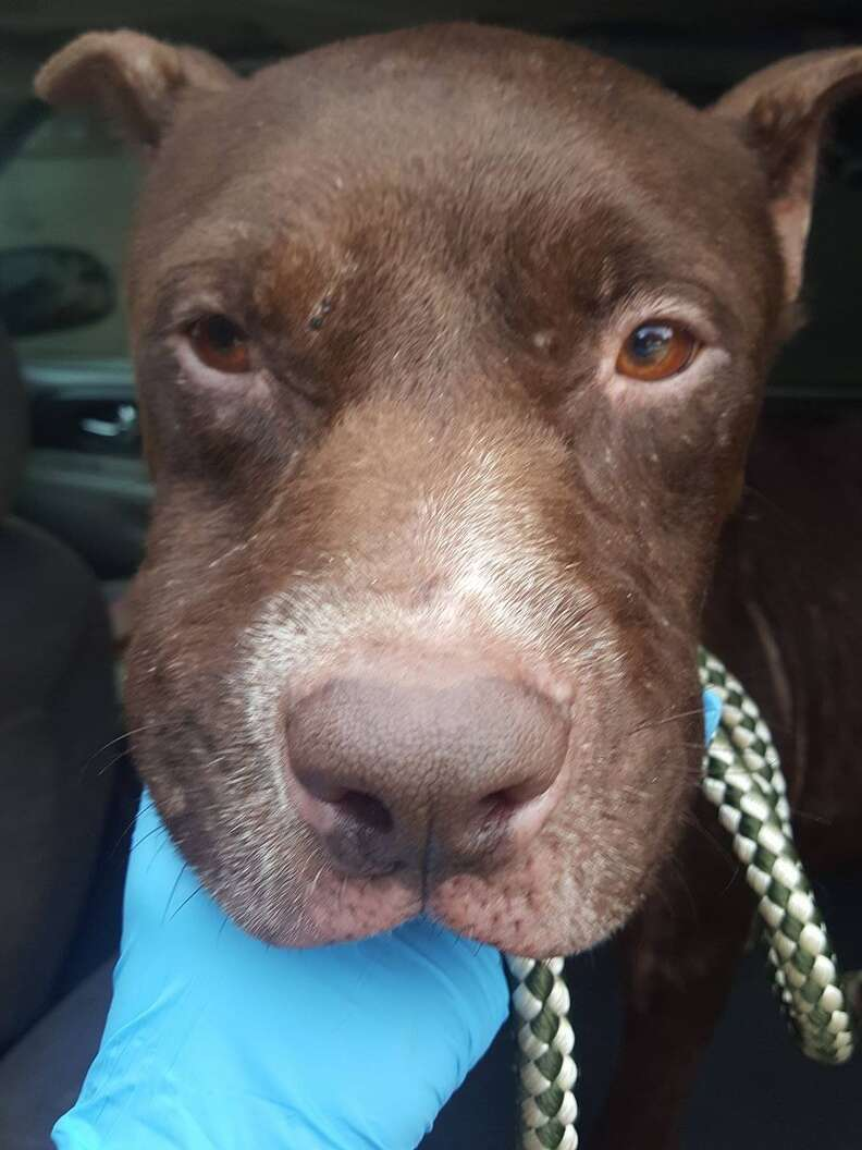 Dog saved from dumping ground in Fort Worth
