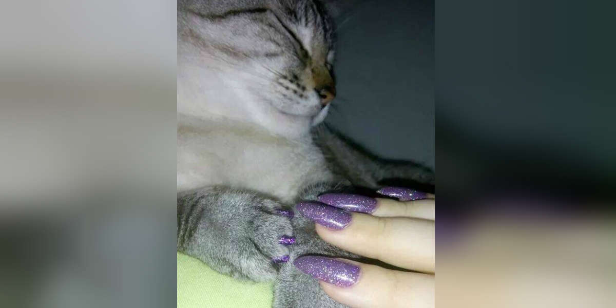 Is It Safe To Paint Your Cat S Nails The Dodo