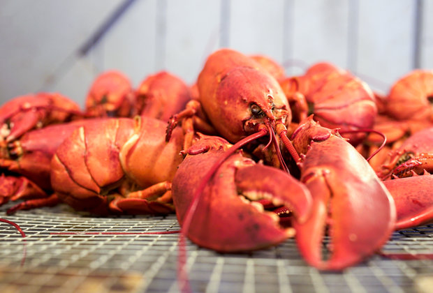 Why Maine Is Lobster, and Lobster Is Maine