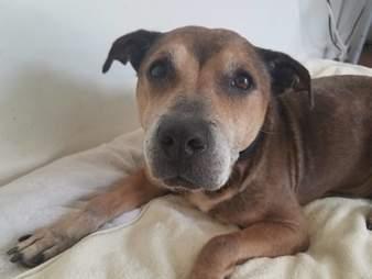 Arthritic senior dog saved from neglect
